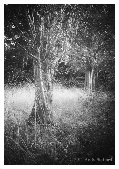 Tree image from Brownie Six-20 Model C