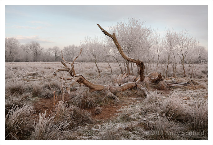 Fallen Tree in Hoar Frost
