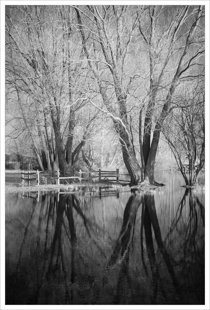 Bare Trees Reflected In Flood Water