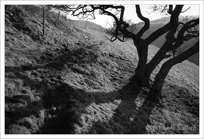 Tree in Cressbrook Dale