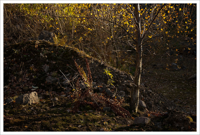 Sunlight catching the leaves of young trees in Middle Peak Quarry