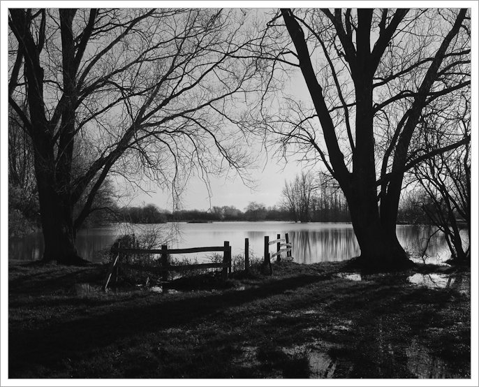 Cossington South Lakes, Fomapan 100, 5x4 film