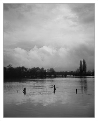 Flooded Field, Fomapan 100, 5x4 film