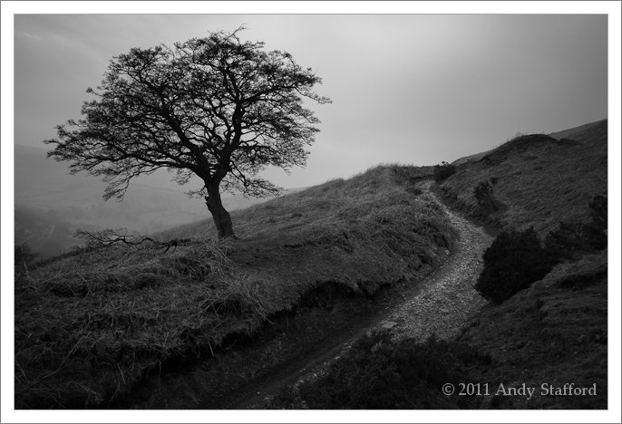Tree, Win Hill, Derbyshire