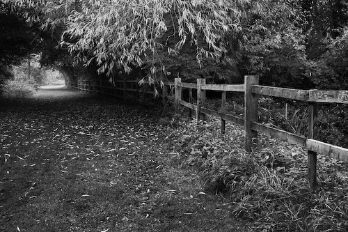 Tree Tunnel, Watermead Park, Leicestershire